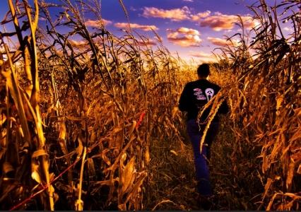 Corn Maze at Halloween