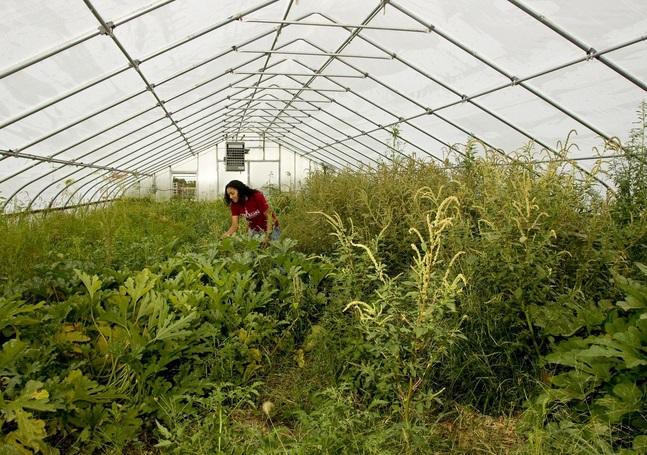 Greenhouse at Thousand Hills Farm
