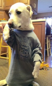 Spirit Day Photo Contest Winner Spike's Furry Friends