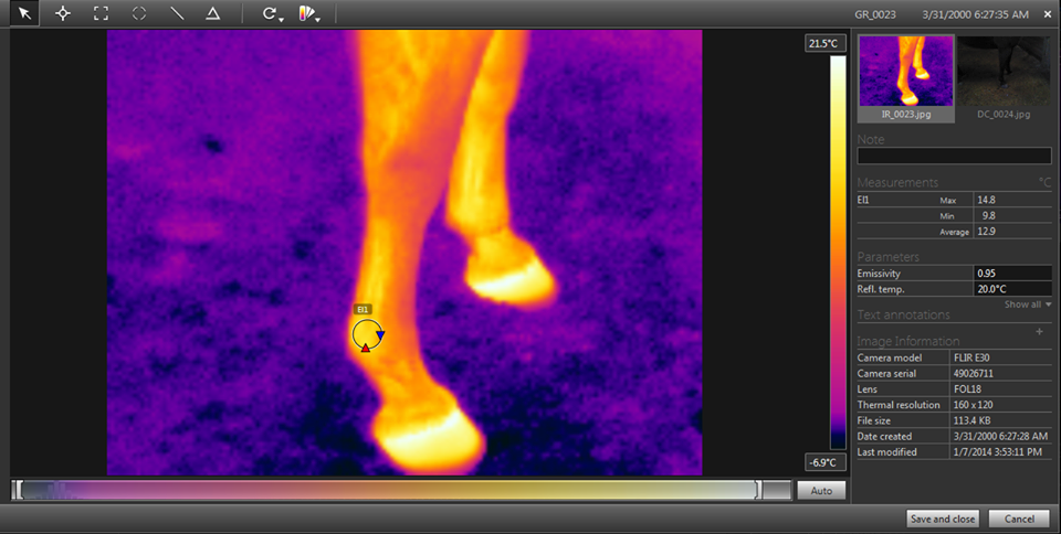 Using thermal imaging in equine science research