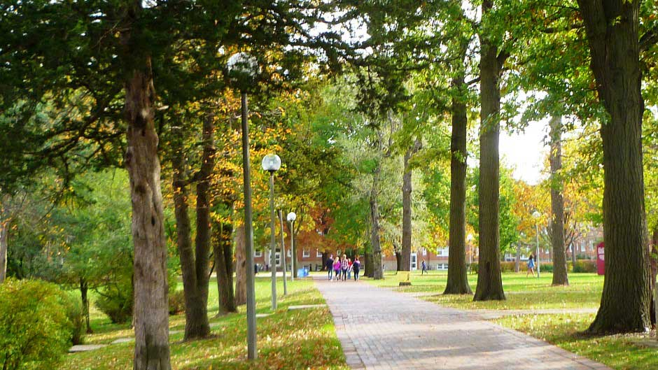 The tree-lined sidewalks on campus create a park-like atmosphere