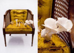 Kate Casanova, 60s Cane Chair & Pearl Oyster Mushrooms, 2011, 60s cane chair, pearl oyster mushrooms, straw