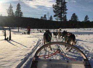 Study in Finland - Dog Sledding