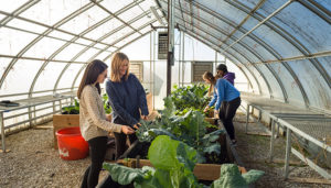 Four students working in a greenhouse