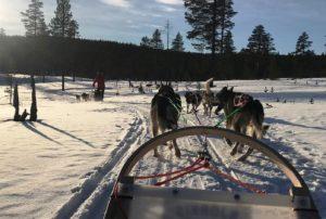 Bob sledding during study abroad trip in Finland